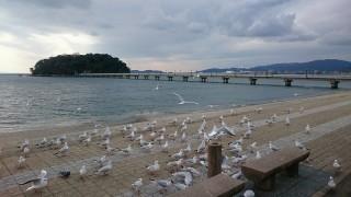 三河湾のアサリや蒲郡みかんなどのご当地グルメや、天然記念物の美しき「竹島」が有名な蒲郡市に視察に来ています