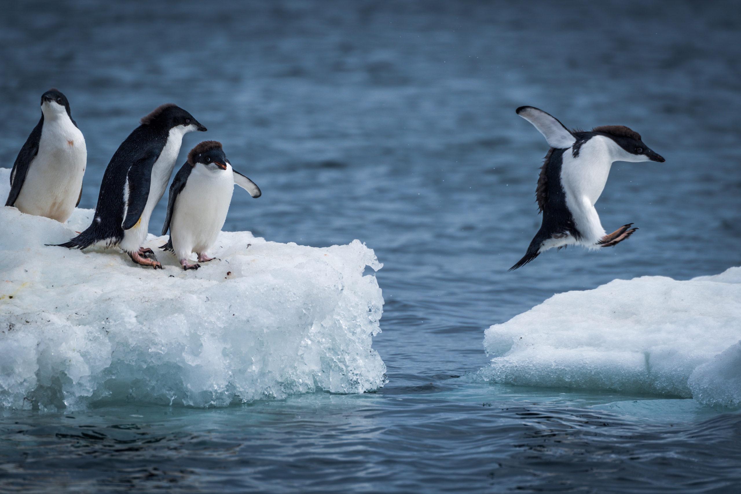 複業のトリセツ制作秘話とファーストペンギンの責務
