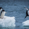 ファーストペンギンとは―最初のリスクを踏む者に敬意を - 『日本の人事部』