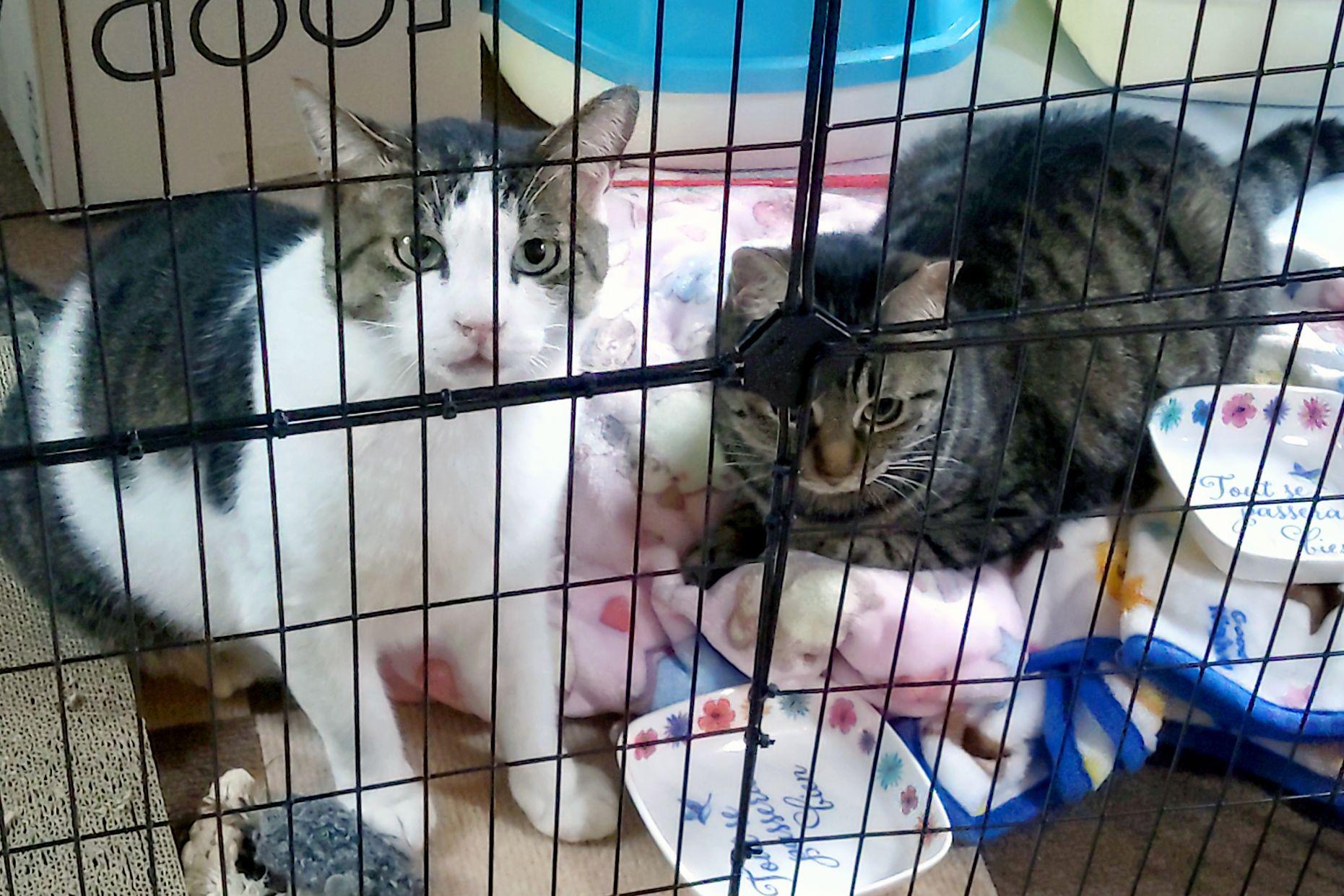 猫様が我が家にやってきた、しかも2匹🐾(1年ぶり2回目)